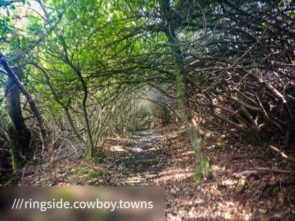 Kilmun - Lochgoilhead_1590684609922 - Faith in Cowal ©subtlesensor2020